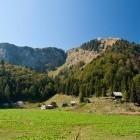 """24-""""Za Črno goro"""" meadow below Črna prst"""