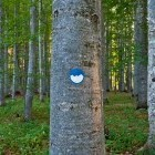 1-Gozd nad zaselkom Sviščaki