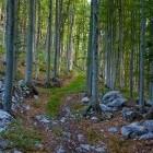 3-Gozd nad zaselkom Sviščaki