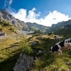 4-Storžič - Nad planino Javornik