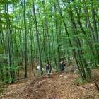 3-Svinjak - Vzpenjanje skozi gozd