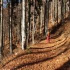 4-Jesen pod Begunjščico