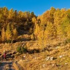 4-Zlati oktobrski macesni