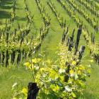 5-Vinogradi pod Marezigami