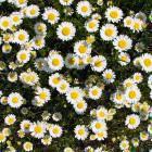 9-Cvetlice
