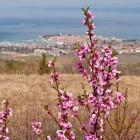 6-Pomlad prihaja v deželo