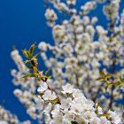 17-Pomlad