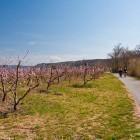 19-Kolesarska steza proti mejnemu prehodu Sečovlje