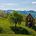 16-Spomladanski poški travniki
