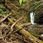 16-Trees in the ravine and the third waterfall