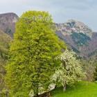 21-View towards Mt. Porezen from Zakojca