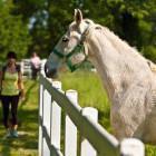 11-Kobilarna Lipica