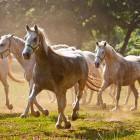 12-Kobilarna Lipica