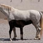 17-Kobilarna Lipica