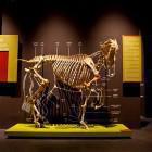 18-Kobilarna Lipica - muzej Lipikum