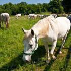 14-Kobilarna Lipica