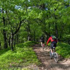 19-Guided MTB tours