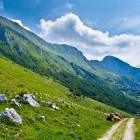 17-Zaprikraj alpine meadow below Mt. Krn