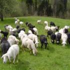 14-Turistična eko kmetija Robidišče
