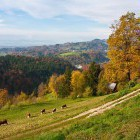 1-Autumn above Stahovica