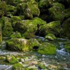 6-The source of Kamniška Bistrica river