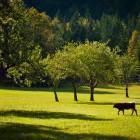 17-Logar valley near Hotel Plesnik