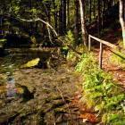 15-Začetek poti po Logarski dolini - proti izviru Črne