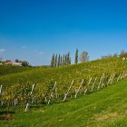 14-Cycling through the endless vineyards, Jeruzalem