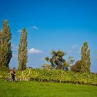 18-Cycling through the endless vineyards, Jeruzalem