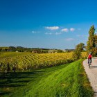 25-Cycling through the endless vineyards, Jeruzalem
