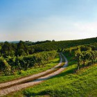 26-Cycling through the endless vineyards, Jeruzalem