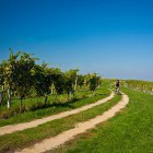 8-Cycling through the endless vineyards, Jeruzalem