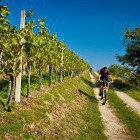 10-Cycling through the endless vineyards, Jeruzalem