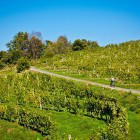 11-Cycling through the endless vineyards, Jeruzalem