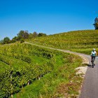 12-Cycling through the endless vineyards, Jeruzalem