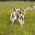 25-Kmetija Mali Raj, domače živali