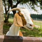 24-Kmetija Mali Raj, domače živali