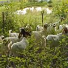 23-Kmetija Mali Raj, domače živali