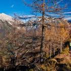 23-Grebenska pot proti Javorjevem vrhu