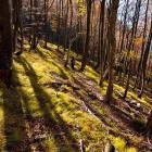 31-Magičen gozd na spustu proti Sv. Jakobu