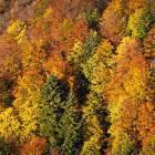 33-Autumn colors