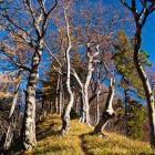 27-The ridge towards Javorjev Vrh