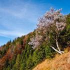 8-Na travnikih pod Hudičevim Borštom