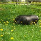 18-Plesnik tourist farm, Logar valley