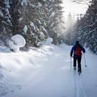 6-Po cesti proti planini Zajamniki