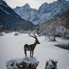 1-Ob jezeru Jasna, Kranjska Gora