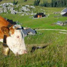 19-Do not miss the friendly countryside of our green Slovenia