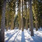 32-Kasneje pa skozi goste pokljuške gozdove