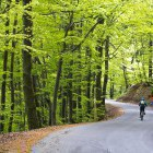 5-Lush forests start just a few minutes from Ljubljana city center