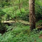 16-Best single trails of Slovenia, Photo: P. Immich